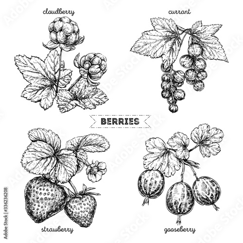 Fotomural Set of hand drawn berries isolated on white background