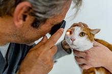 Veterinarian Examining Cat's E...