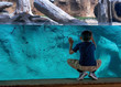 canvas print picture - A young boy looks through glass at a zoo exhibit