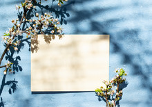 Empty Card With Shadow Of A Blooming Tree