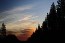 Nacreous Clouds In The Morning Over Forest Silhouette
