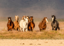 Wild Horses In Desert Of Utah
