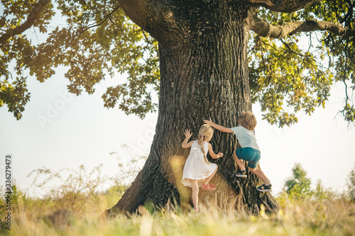 Fototapeta Overcoming the fear of heights. Happy children on countryside. Climbing trees children. Little boy and girl climbing high tree. Funny brother and sister. obraz