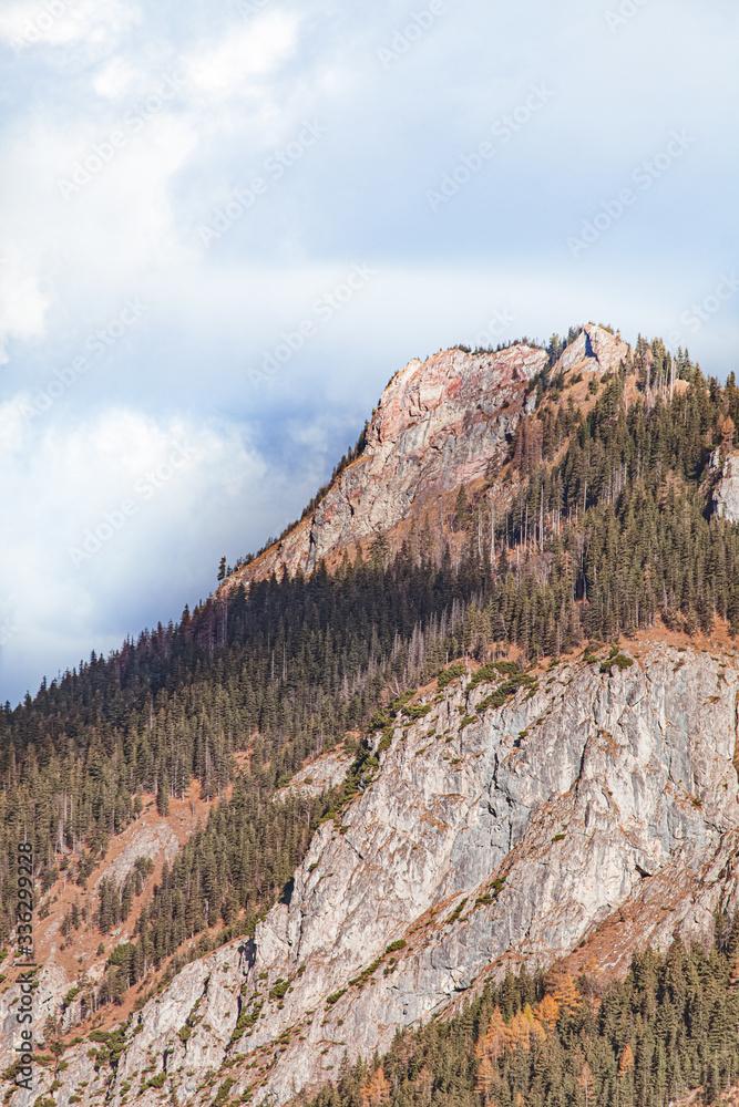 Evergreen forest on the mountain cliff. Tatra natural park, Zakopane, Poland
