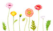 花 水彩 春 ポピー 自然