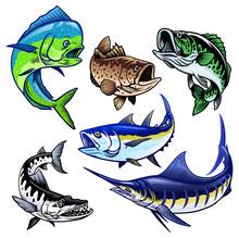 Set Of Gamefish Bundle Collection