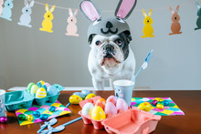 Dog With Costume And Easter De...