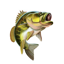 Largemouth Bass Fish Illustrat...