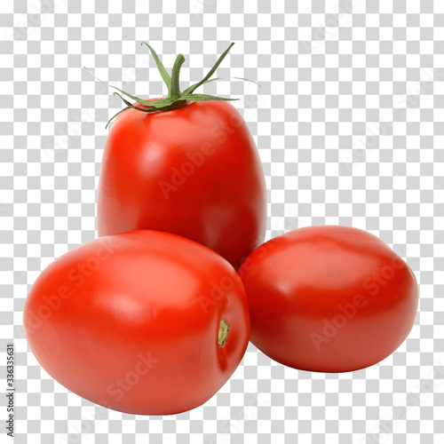 Fototapeta San marzano Italian pomodoro or plum tomatoes on isolated background including clipping path obraz