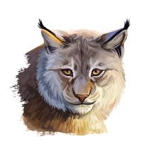 Eurasian Lynx Medium-sized Wil...