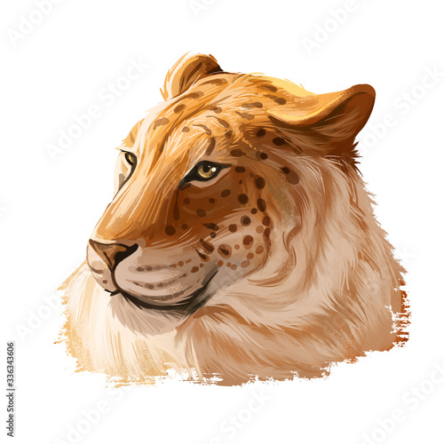 Fotografie, Tablou Liger hybrid offspring of lion and tiger, watercolor portrait closeup