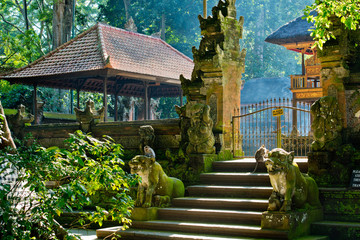 The sacred temple monkeys in the forest.  Monkey forest, Ubud, Bali, Indonesia.