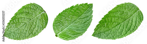 Obraz Collection mint isolated on white background. Mint leaf clipping path. Mint macro studio photo - fototapety do salonu