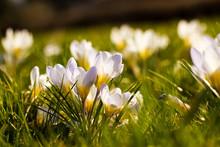 White Spring Flowers Green Summer Beautiful Yellow Flora