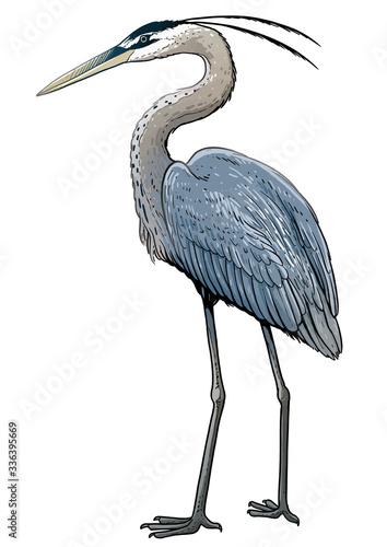 Fototapeta Grey heron illustration, drawing, colorful doodle vector