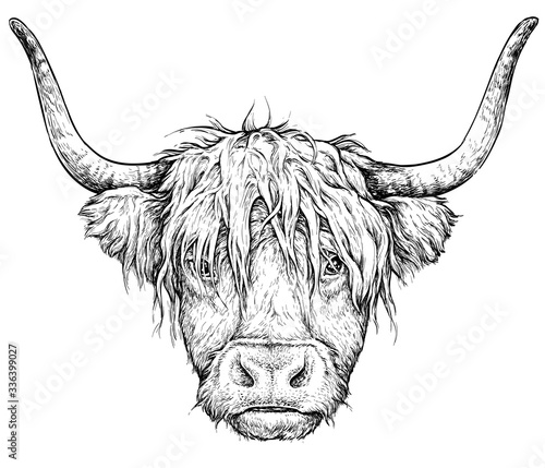 Papel de parede Realistic sketch of Scottish highland Cow, black and white drawing, isolated on