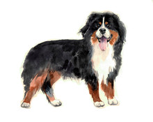 Watercolor Funny Dog On The White Backround