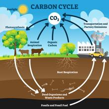 Carbon Cycle Vector Illustrati...
