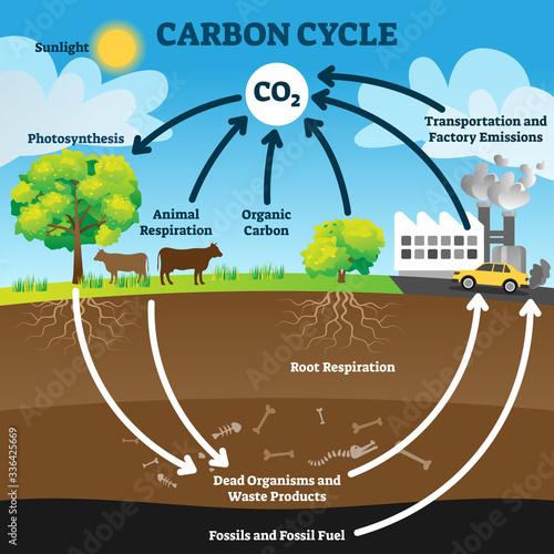 Carbon cycle vector illustration Fotobehang