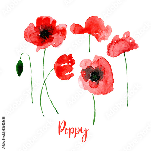 Watercolor red poppy flower set. Collection of hand drawn flowers isolated.