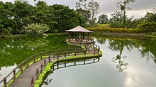 Landscape Of A Pond With Its G...