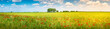 Panoramic view over beautiful green and yellow farm landscape and meadow field with red poppy flowers, Germany