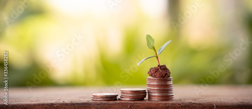 Financial planning, Money growth concept Fototapeta