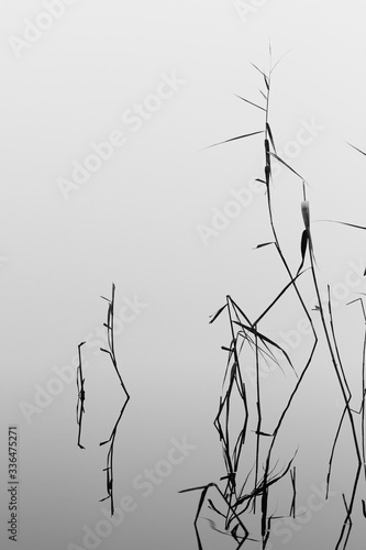 Monchrome Black and White Picture Of Reeds Reflecting In A Still Mirror Like River Canvas Print