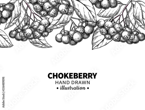 Chokeberry vector drawing. Hand drawn botanical template with berries and leaves. Engraved Illustration of herb Wall mural