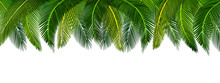 Dense Thickets Of Tropical Green Palm Leaves On Top Of The Picture. Place For Advertisement, Announcement. Illustration