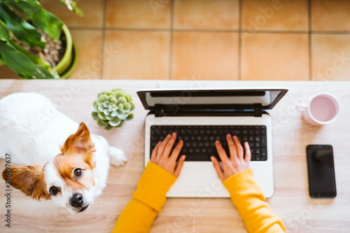 young woman working on laptop at home,cute small dog besides Canvas Print