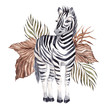 Watercolor illustration with African zebra and tropical leaves, isolated on white background