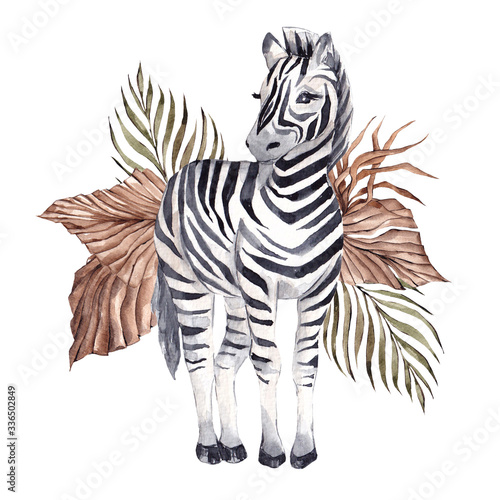 Fototapeta Watercolor illustration with African zebra and tropical leaves, isolated on white background obraz