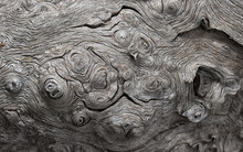 Texture Of An Old Gnarled Oak ...