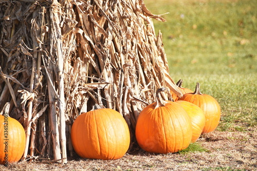 Pumpkins and Cornstalks Tapéta, Fotótapéta