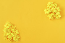 Spring Floral Composition Made Of Fresh Yellow Flowers On Yellow Background. Festive Flower Concept.