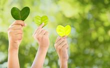 Hands Holding Green Heart Shap...