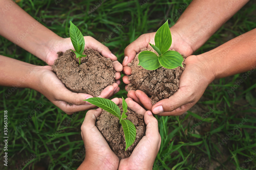 Fototapeta three hand group holding small tree growing on dirt with green grass background. eco earth day concept