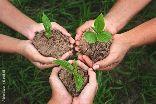 three hand group holding small tree growing on dirt with green grass background. eco earth day concept