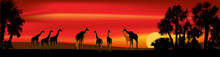 Giraffes Group Near Palm Trees At Red Sunset