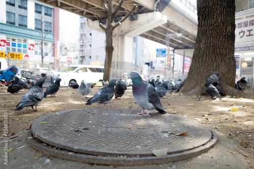 鳩の集会  2 Fototapet