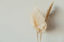 Fan Leaves Made Of Craft Paper On White Background. Minimal Floral Concept.