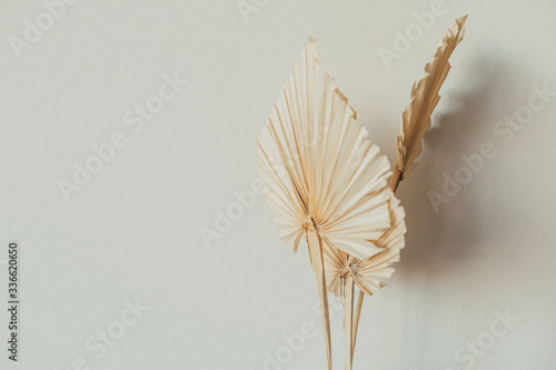 Obraz Fan leaves made of craft paper on white background. Minimal floral concept. - fototapety do salonu