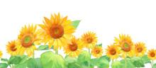 夏の花:ひまわりの水...