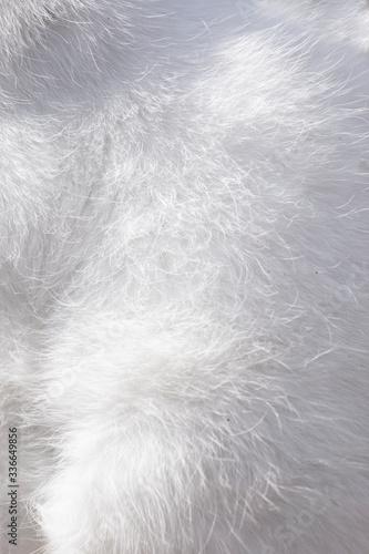 Photo White soft fluffy angora cat fur texture delicate animal furry background