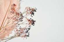 Pink-yellow Feather And Dry Flowers On White Background.