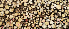 Stack Of Wood Tree Cut