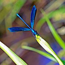 Blue Dragonfly On A Green Leaf