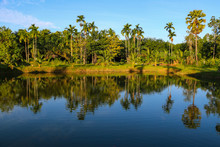 Landscape View Of A Tropical G...