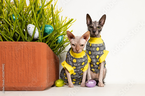 Photo Happy Easter Sphynx and Lykoi Cats
